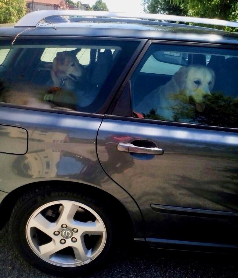 cinetosi; mal d'auto; cane