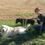 Come approcciare cane; educazione