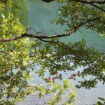 Adamello Brenta; Tovel; Lago rosso