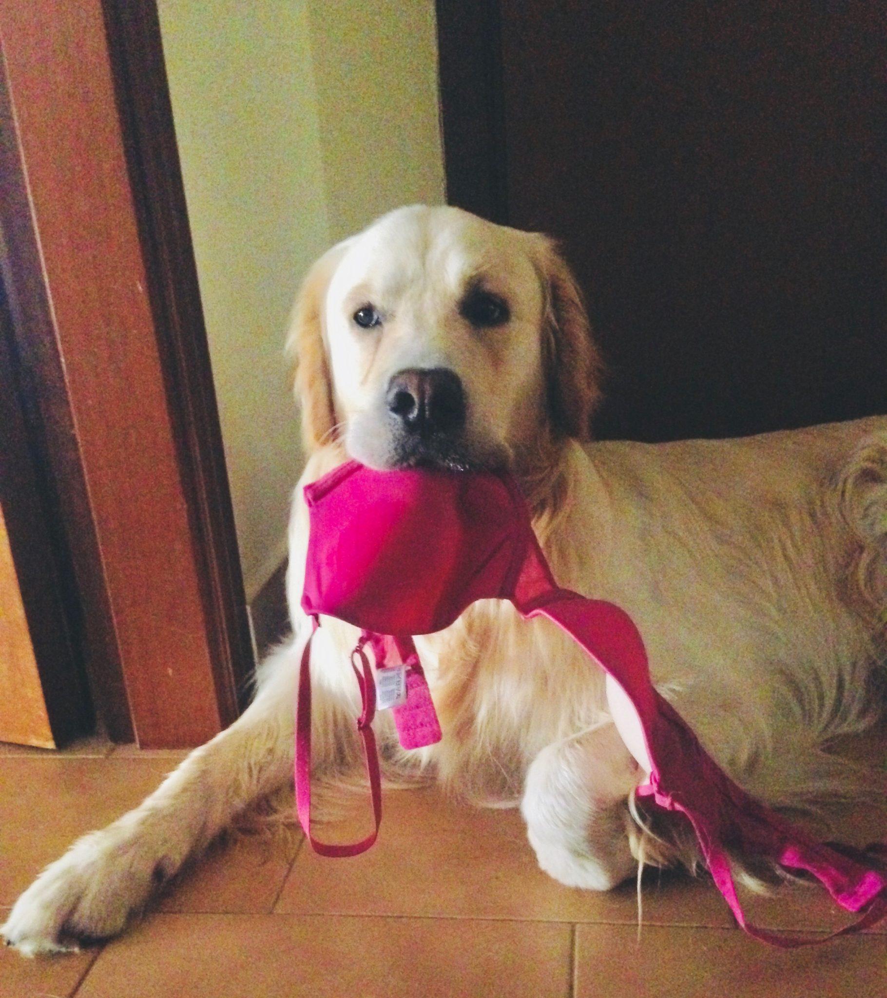 lasciare il cane da solo in casa